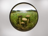 Small Fairy Ring Mushroom Cluster
